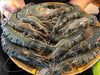 Black Mangrove Tiger Prawns (Large, 1kg) - Dishthefish