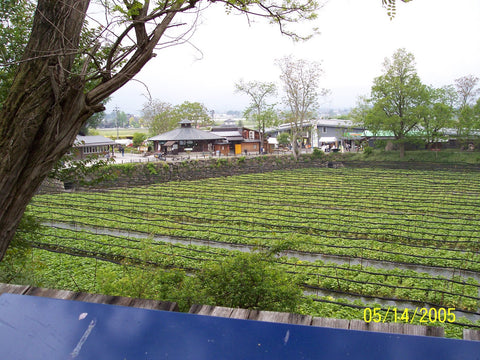 Wasabi Cultivation