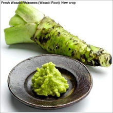 Load image into Gallery viewer, Fresh Wasabi Rhizomes (Wasabi Root) New crop - 1/2 LB Fresh Wasabi Rhizomes / Sawa Daruma - Wasabi