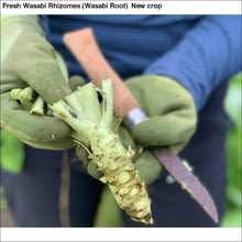 Load image into Gallery viewer, Fresh Wasabi Rhizomes (Wasabi Root) New crop - 5 LB Fresh Wasabi Rhizomes / Sawa Daruma - Wasabi