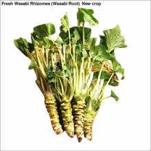 Load image into Gallery viewer, Fresh Wasabi Rhizomes (Wasabi Root) New crop - Wasabi