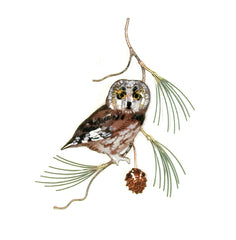 Saw Whet Owl on Pine