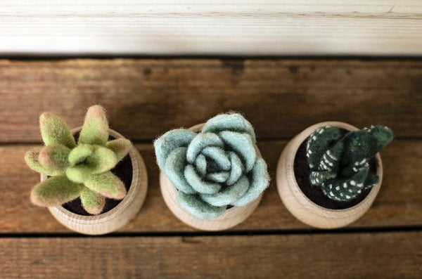 Felted Sky Needle Felting Kit: Succulents