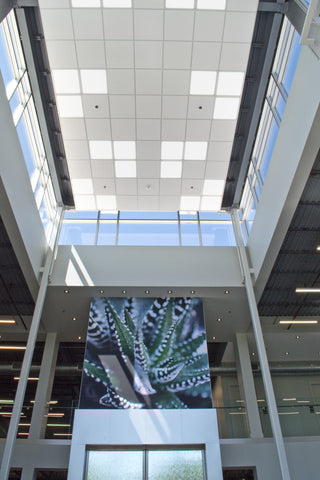 Skylight LED panels (2x2ft models) installed in an office