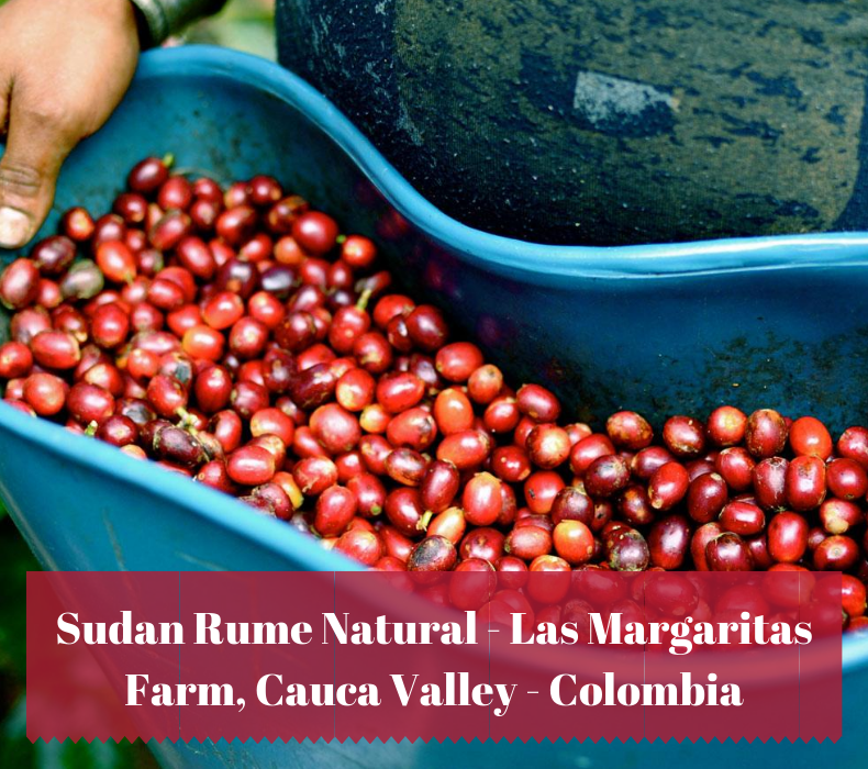 A new super limited lot - Sudan Rume Natural