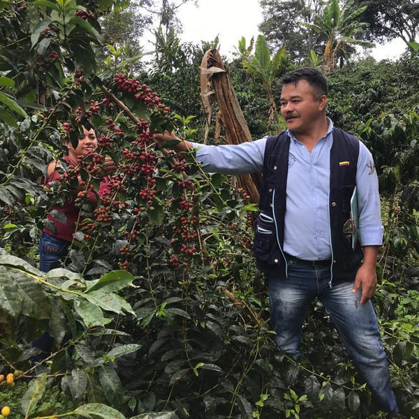 Mammutidae Collective Natural Lot #2 - Garzon, Huila