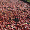 Wocho Sololo Anasora Natural, East Guji - December Special -