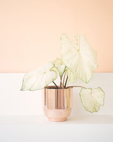 "Copper 8"" Spun Planter - Hesby"
