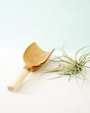 White Swirl Olivewood Scoop