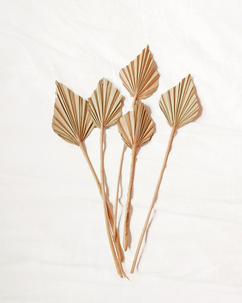 Natural Mini Dried Palm Spears