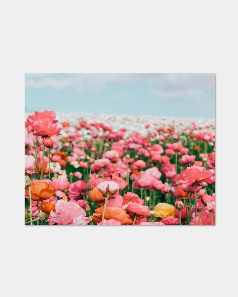 Flower Fields Forever Print - Hesby