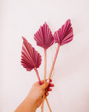 Pink Dried Palm Spears