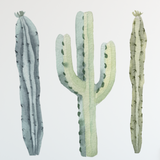 Cactus decal - Cactus Wall Decal - Cactus Wall Stickers - Cacti - Southwestern Decor - Cactus Wall Art - Dorm Wall Decor Peel & Stick Cactus