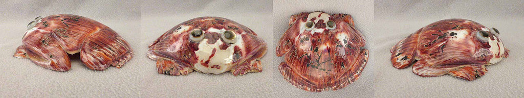 Spiny Oyster Frog  by Brian Yatsattie