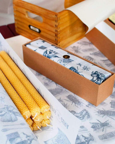 Apis Cera, Ambroise Deluxe Box of 2, French Hand-Rolled Beeswax Pillar Candles