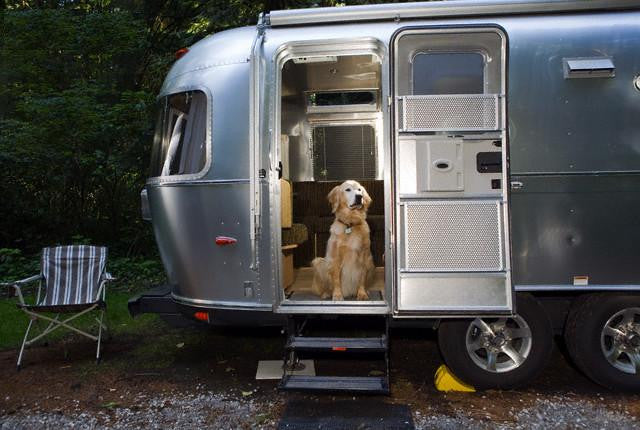 RVing With Man's Best Friend - Tips for Taking Your Dog on the Road