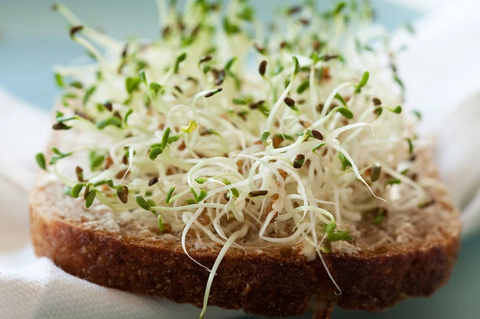 Alfalfa Sprouts 50g