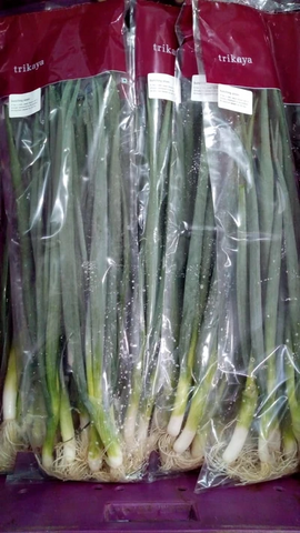 Bunching Onions/Scallions 250g