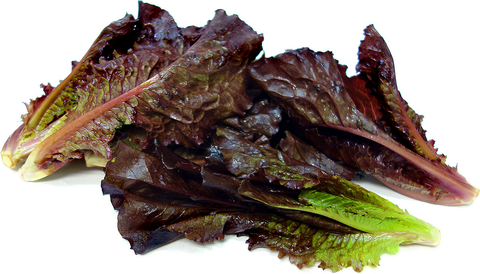 Lettuce Romaine Red 250g
