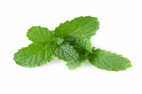 Apple Mint 10g
