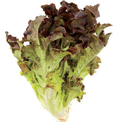 Lettuce Oakleaf Red 250g