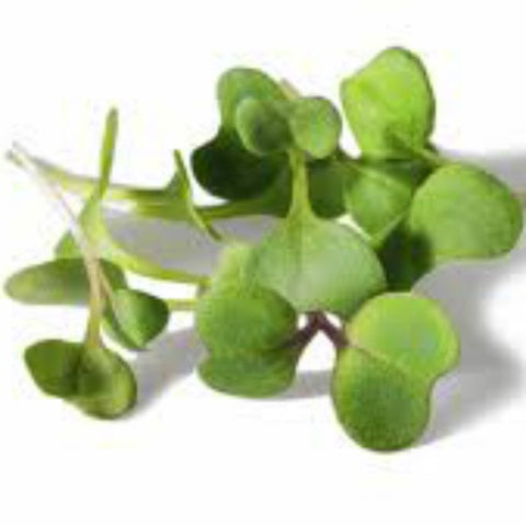 Sunflowers (Microgreen) 50g