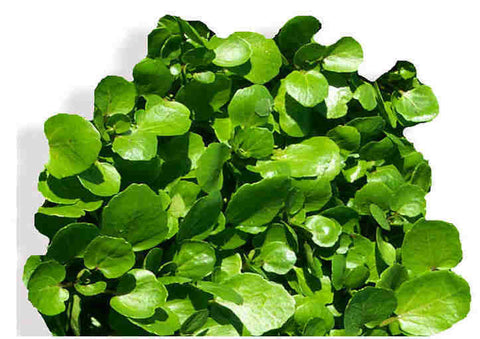 Watercress 50g