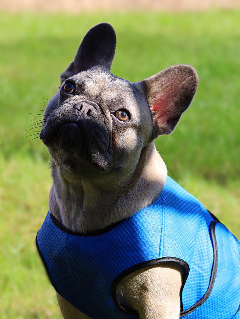 DOG COOLING VEST - FRENCH BULLDOG