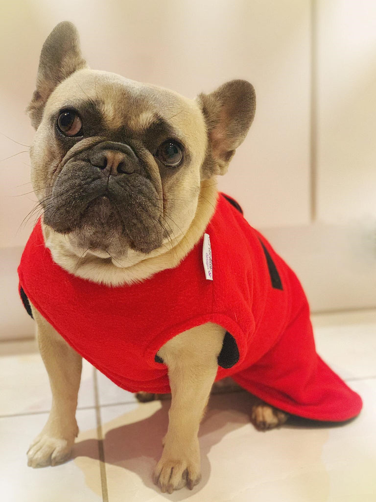 TAY DOG DRYING COAT - FRENCH BULLDOG