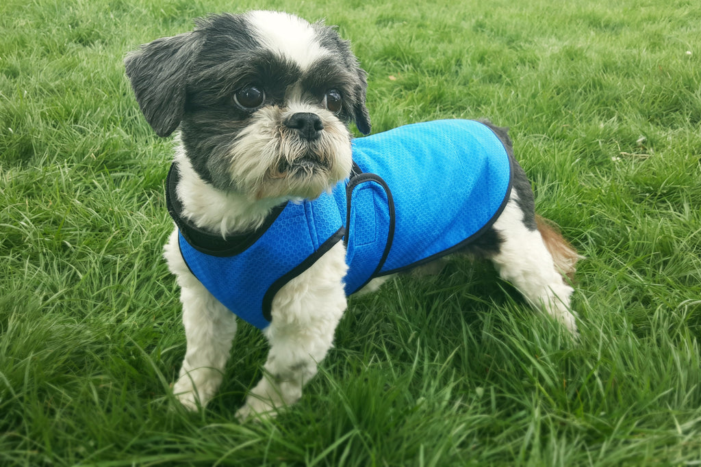 THERMLOW DOG COOLING VEST
