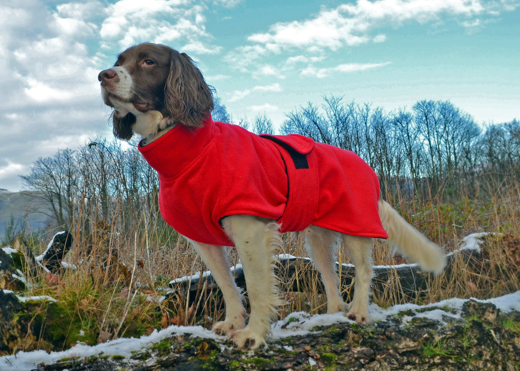 Dog drying coat made to measure Ness Fleece Microfibre Towelling