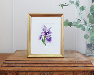 """Majestic Iris"" an Original Watercolor Painting"