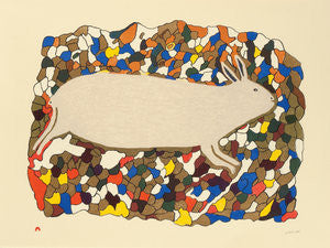 STARTLED HARE - Northern Expressions | Papiara Tukiki - Print | | Canadian Indigenous & Inuit Art