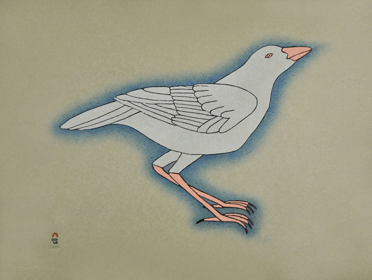 White Raven - Northern Expressions | Qavavau Manumie - Print | | Canadian Indigenous & Inuit Art