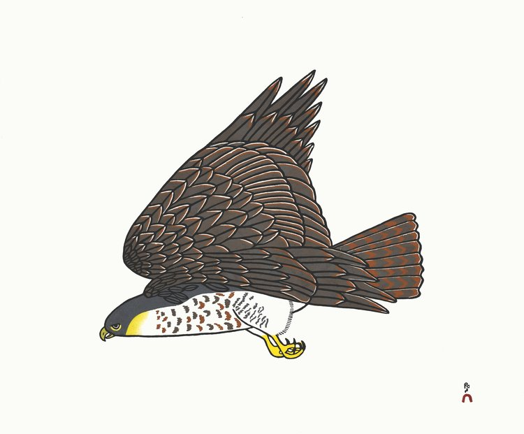 Peregrine Falcon - Northern Expressions | PAUOJOUNGIE SAGGIAK - Print | | Canadian Indigenous & Inuit Art