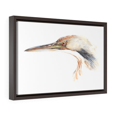 Bittern (framed premium gallery wrap canvas)