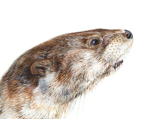 River Otter watercolour art print on canvas 12 x 16 in.