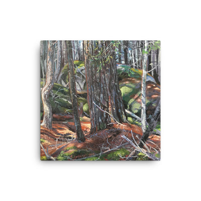 White Pine Among the Boulders, print on canvas 12 x 12 in.