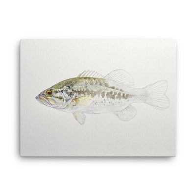 Canvas print of Largemouth Bass Emerging