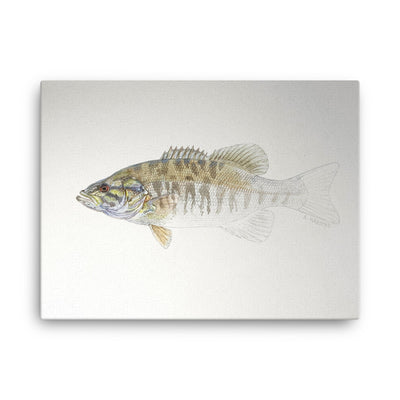 Canvas print of Smallmouth Bass Emerging