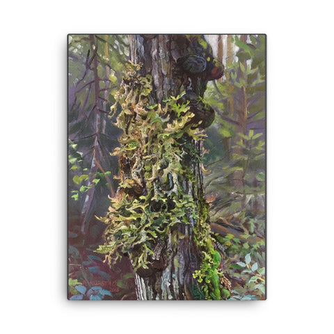Dumoine Aspen With Lichens (print on canvas)