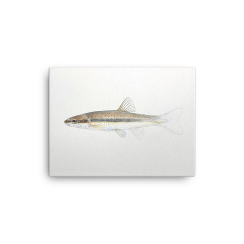 """Blacknose Dace Emerging"" print on canvas"