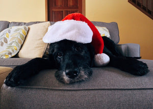 Planning for Holiday Time Away From Your Dog