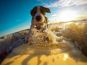 Cooling Off At The Beach With Your Dog