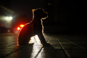 Tips to Stay Safe While Walking Your Dog in the Dark