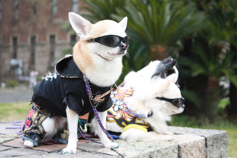 dog with sunglasses and leather jacket racist