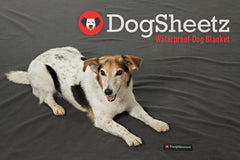 DogSheetz waterproof blanket