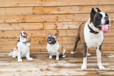 Brown and white dogs that eat single ingredient dog treats