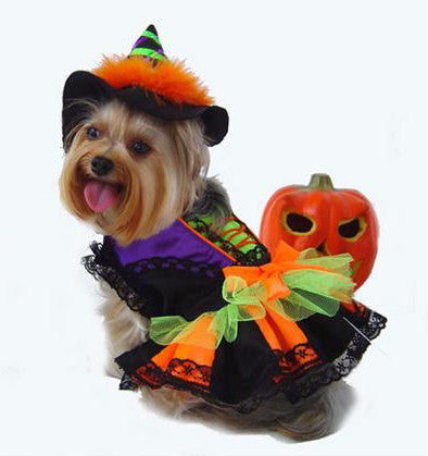 Halloween Witch Dog Costume - Really Good Pets Shop - Costume -  - PuppeLove