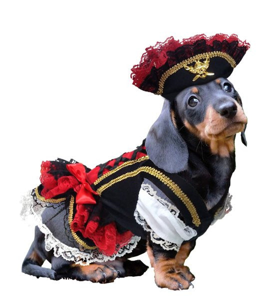 Swashbuckler Pirate Dog Costume - Really Good Pets Shop - Costume -  - PuppeLove - 1